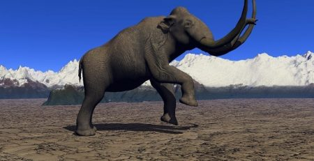 Scientists have successfully added Mammoth DNA to an Elephant