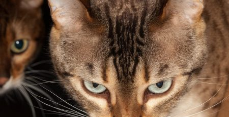 Two Faced Cat discovered to have severe Cancer
