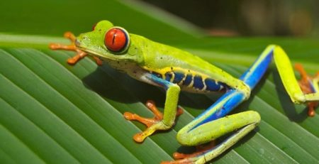 Why Do Frogs Have Such Big Eyes? Now We Know